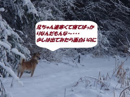 P2050565_convert_20140206075849.jpg