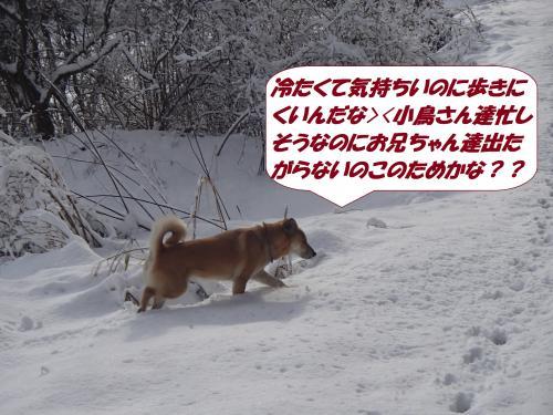 P2050567_convert_20140206075916.jpg