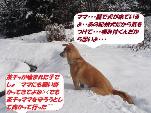 P2050572_convert_20140206075956.jpg