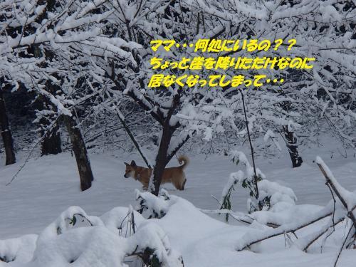 P2050577_convert_20140206080025.jpg