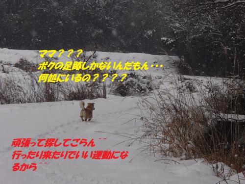 P2050578_convert_20140206080039.jpg