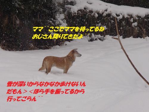 P2050582_convert_20140206080106.jpg