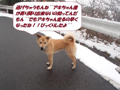 P2060614_convert_20140207081610.jpg