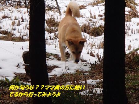P2090657_convert_20140210075700.jpg