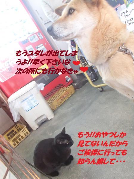 P2100668_convert_20140211072903.jpg