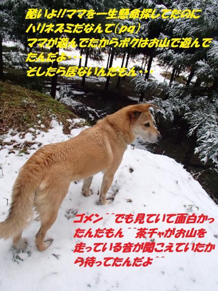 P2100679_convert_20140211080729.jpg