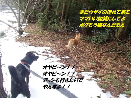 P2110681_convert_20140212081507.jpg