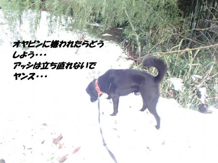 P2110694_convert_20140212081740.jpg
