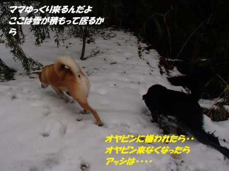 P2110695_convert_20140212081756.jpg