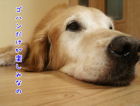 DSC_0094aquo2w45.jpg