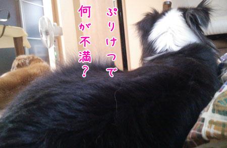 DSC_7704aquow45.jpg