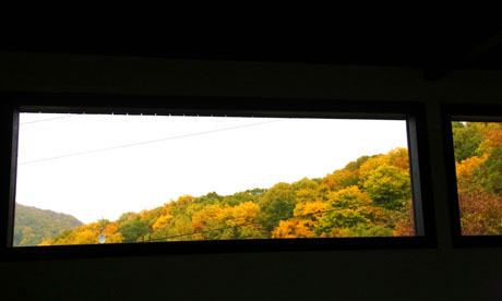 20131025黄葉