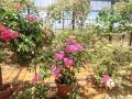 農園 花(7)