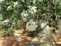 農園 花(9)