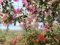 農園 花(10)