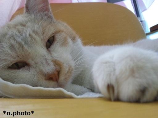 ネコ (2)