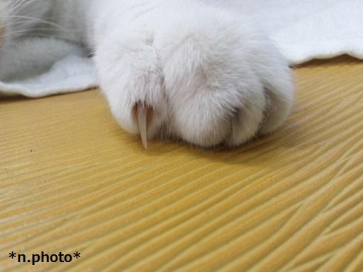 ネコ (3)