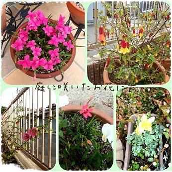庭のお花たち-1