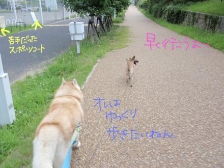 image_20130803184510a9e.jpg