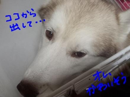 image_201308111740115a7.jpg