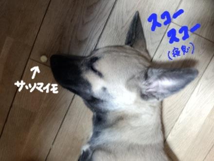 image_2013090200321382f.jpg