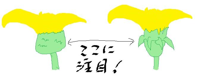 IMG_2218違いに注目
