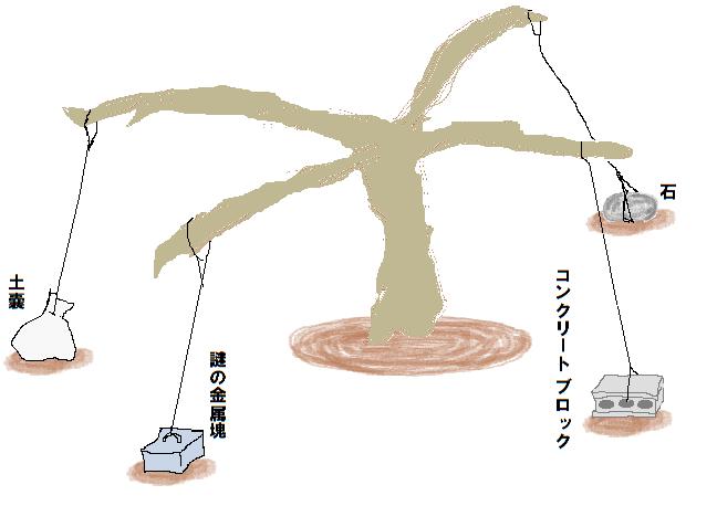 筋トレ中 無花果の木