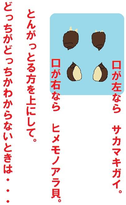 IMG_2471見分け方
