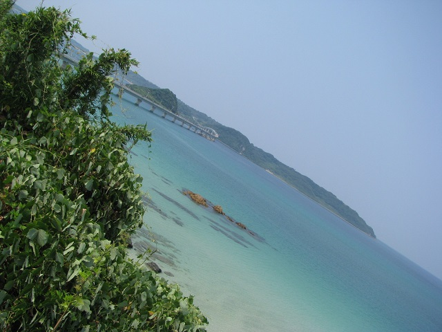 IMG_海2917