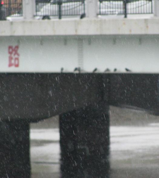 IMG_雨宿り3033