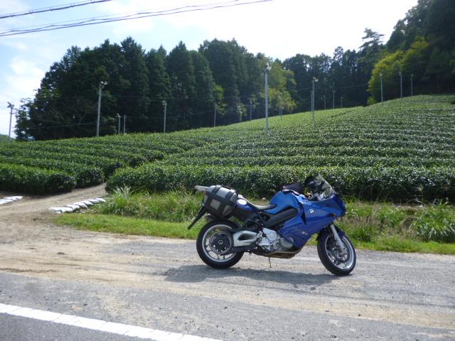 P1100120.jpg