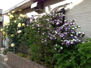庭のお花-1