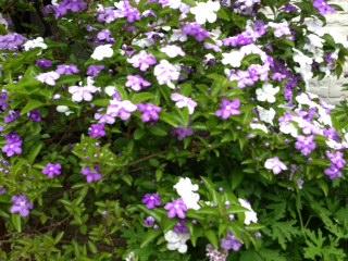 庭のお花-2