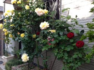 庭の花-3