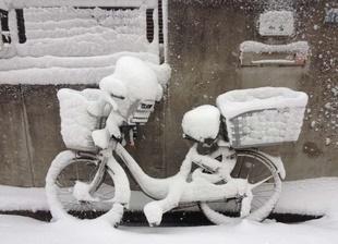 大雪でしたね