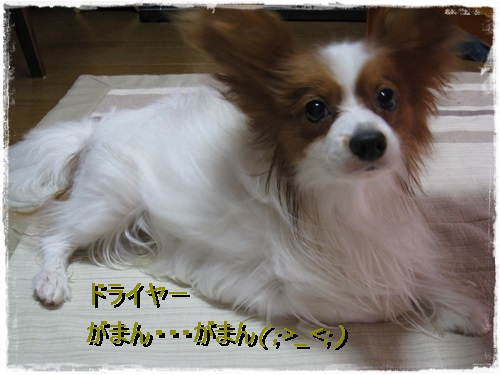 IMG_9251 1