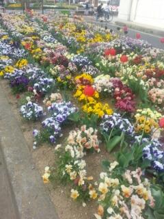 通りの花壇