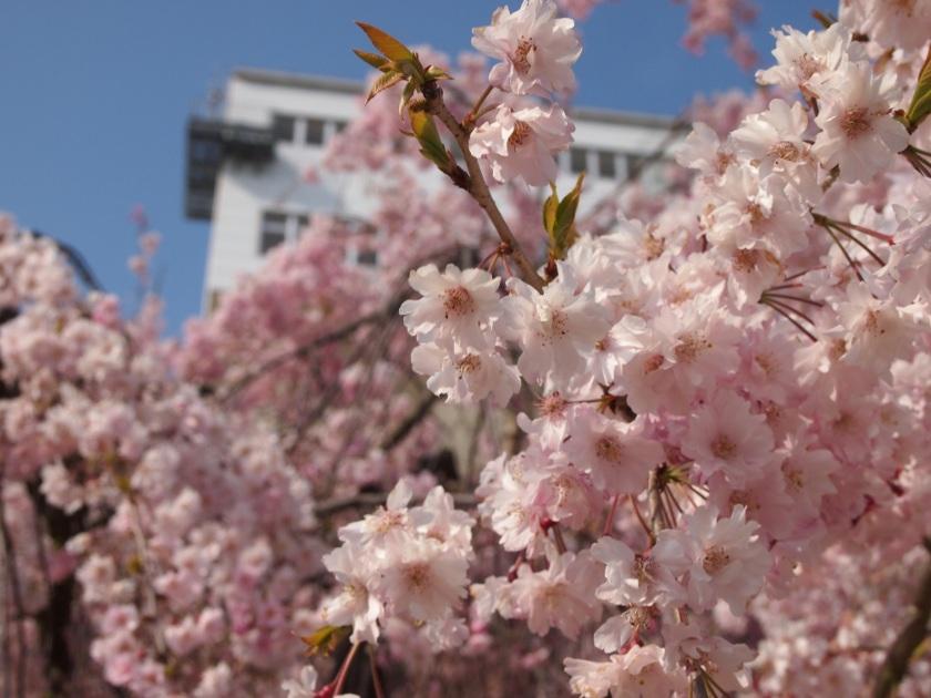 姫路城17