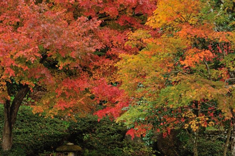 2014-11-08_0080-3-750.jpg
