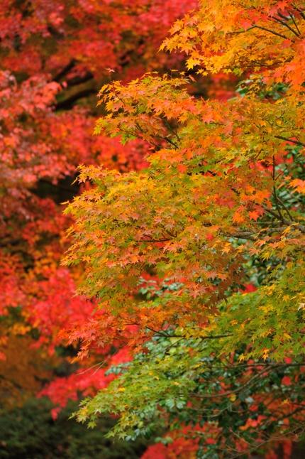 2014-11-08_0082-430.jpg