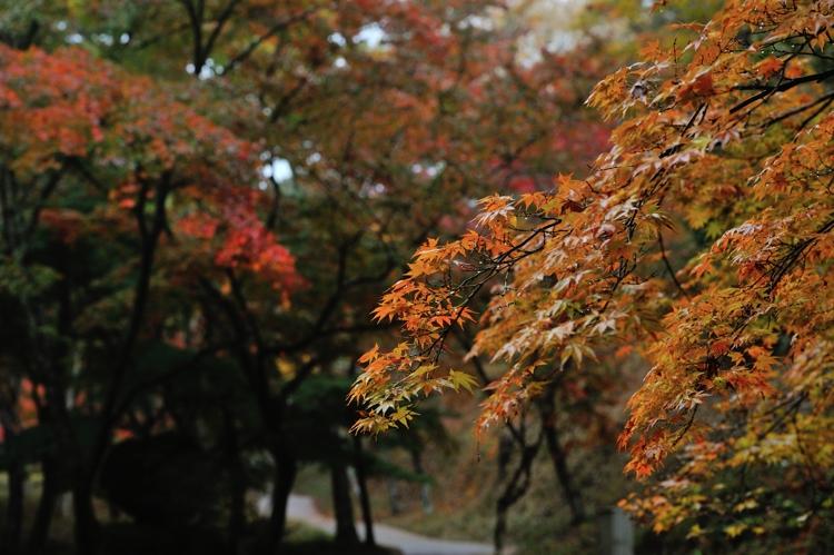 2014-11-09_0015-750.jpg
