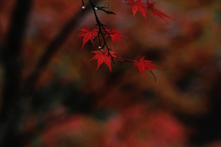 2014-11-09_0019-750.jpg