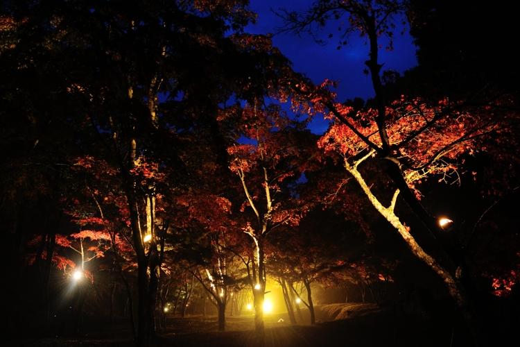 2014-11-09_0041-750.jpg