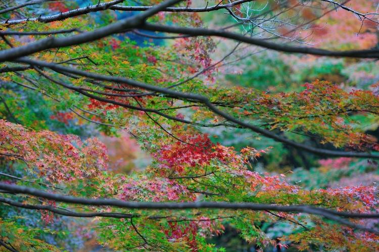 2014-11-12_0048-750.jpg