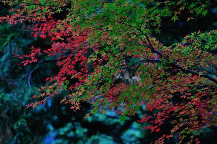 2014-11-12_0093-750.jpg
