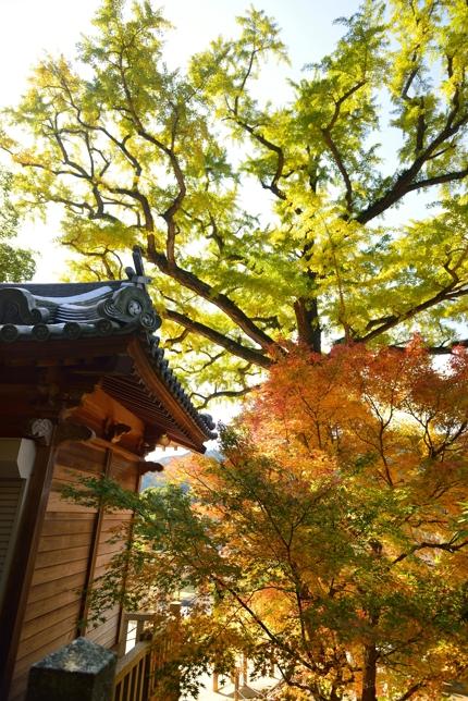 2014-11-15_0042-430.jpg