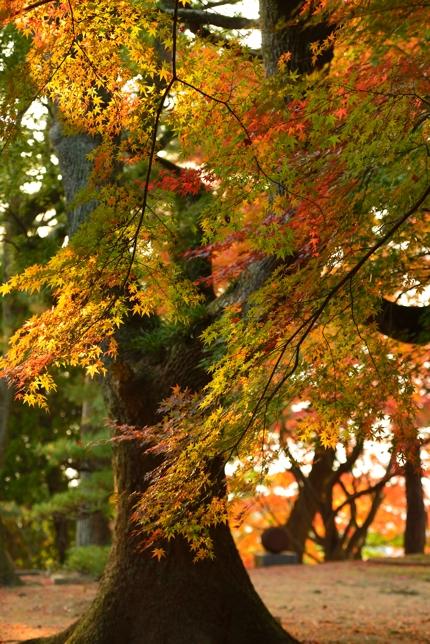 2014-11-17_0021-430.jpg