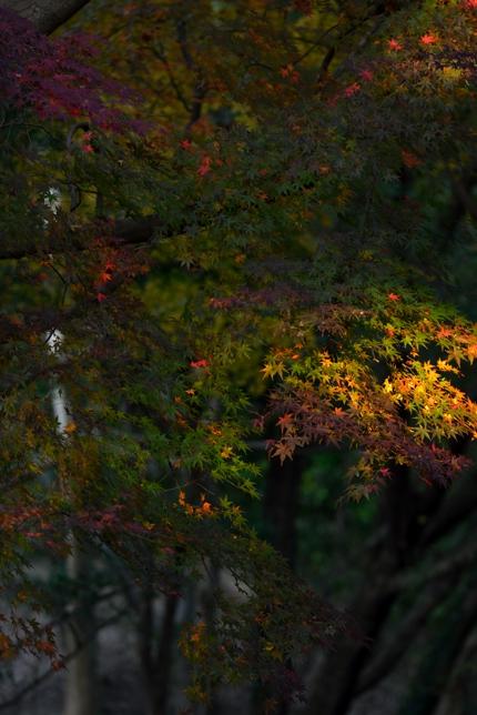 2014-11-17_0031-430.jpg