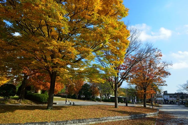 2014-11-22_0004-750.jpg