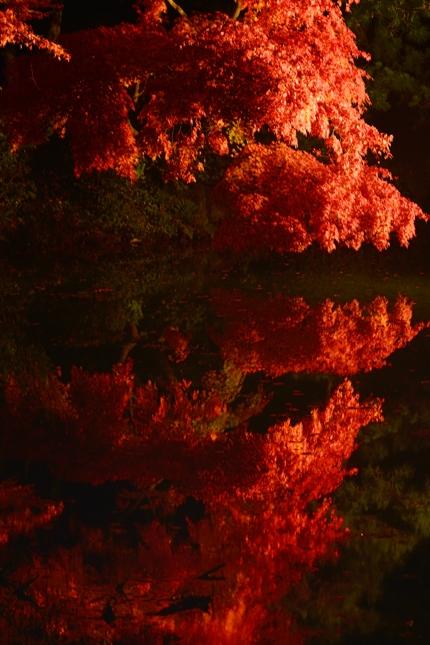 2014-11-22_0093-3-430.jpg